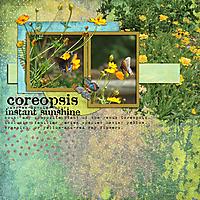 Coreopsis1.jpg