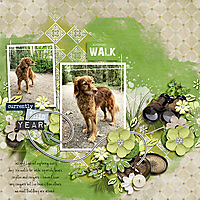 everdaywalk-copy.jpg