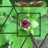 BUDS_1.jpg